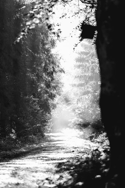 mystisches Licht, Waldimpressionen, Pomponetti
