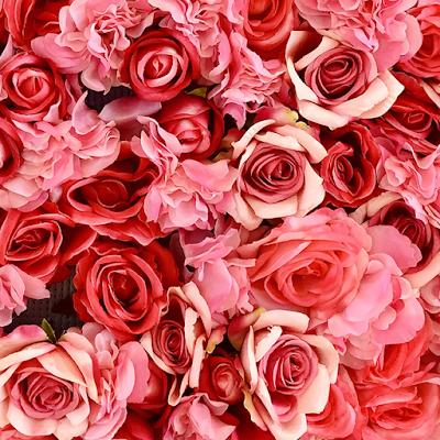 rose flower images