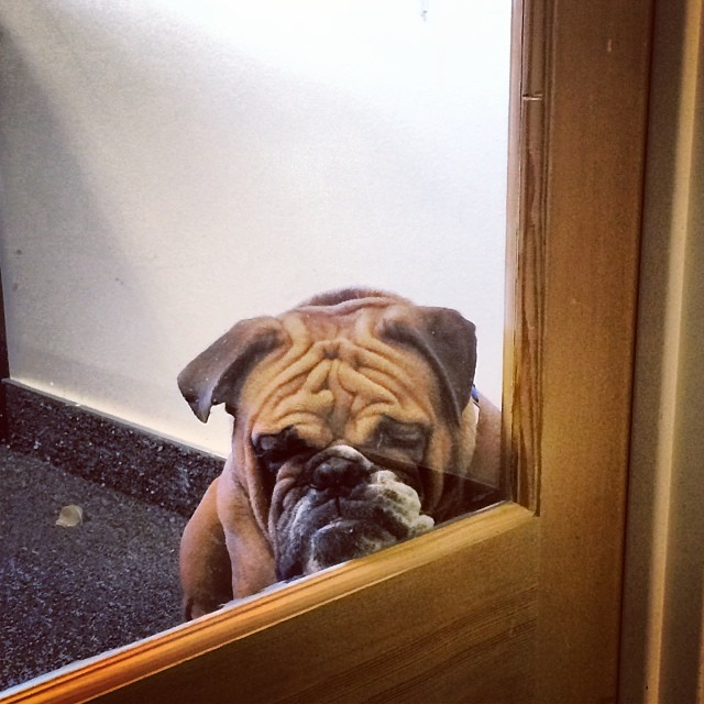 17 Hilarious Problems Dog Owners Will Relate To - That sad look you just can't get mad at.