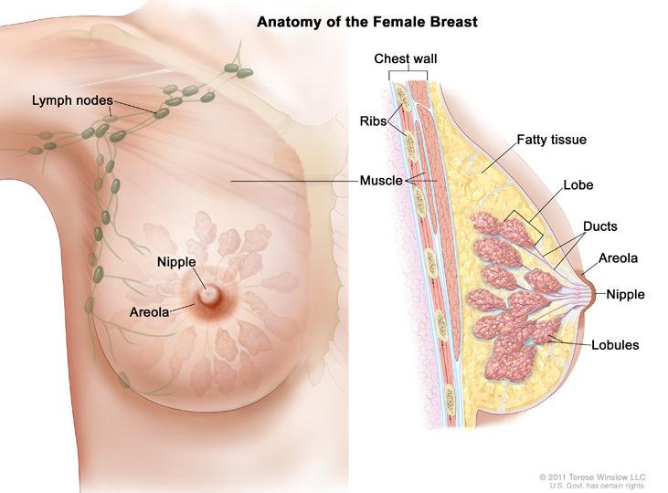 sadari-kamu-bisa-menderita-kanker-payudara
