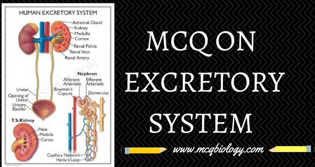 MCQ on Excretory Products and their elimination-mcq on excretory system