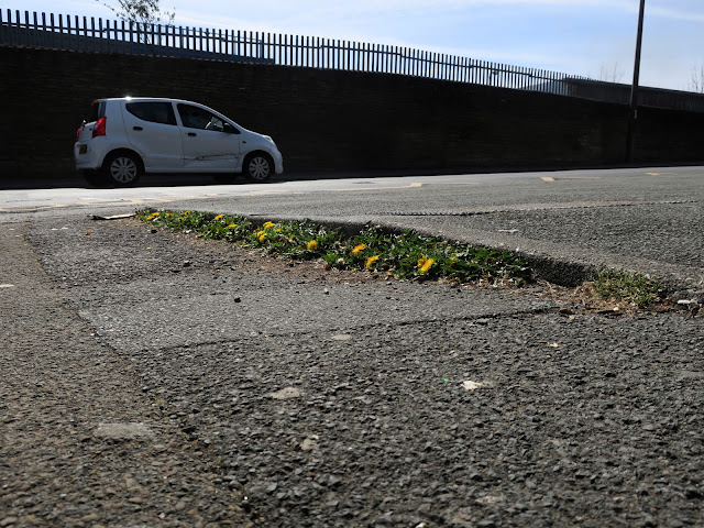 Dandelions in kerb with wall and car in background and lots of tarmac. 24th April 2021.