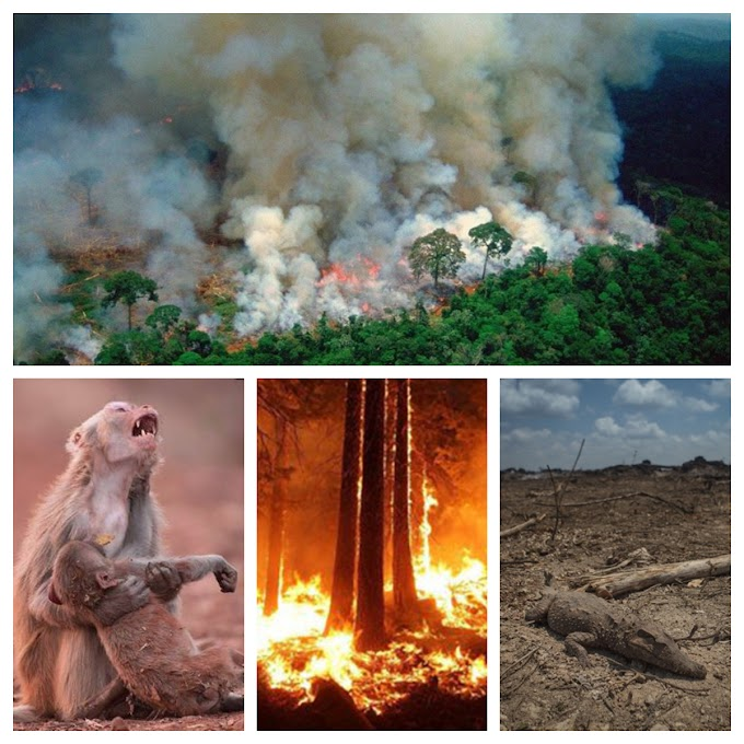 Amazon Rainforest Forest Fire 2019 – Record Breaking Wildfires In The Amazon Basin Since Record Began In 2013