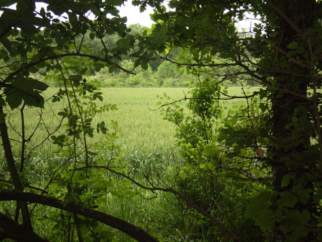 Field and Foliage
