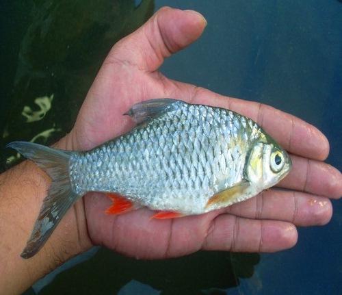 Blognya Pendidikan Dan Hiburan Ikan Air Payau Dan Ikan Air Laut