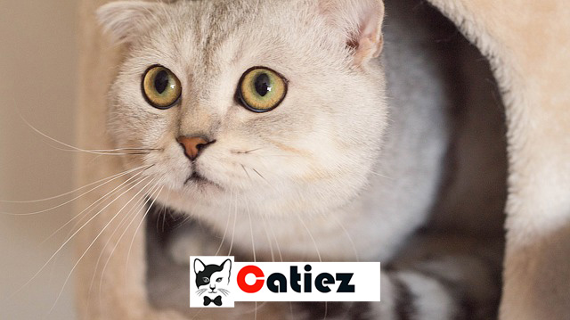 cats & kitten - everything you need to know about cats