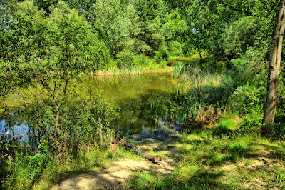 Smolnica - Pond Słoneczny