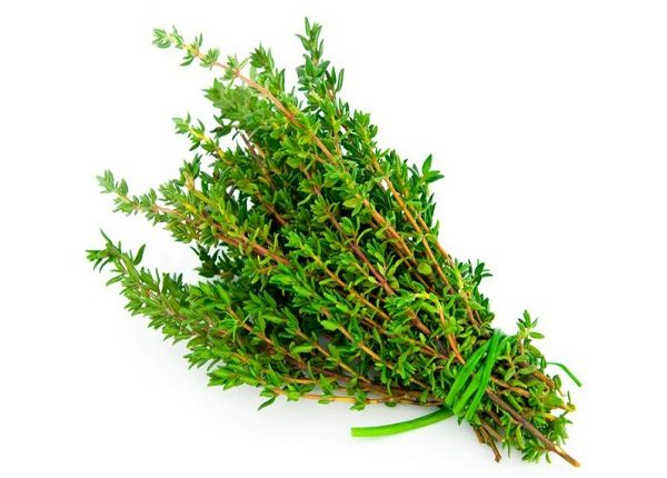 What are the benefits of thyme green ?