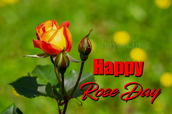 world rose day september