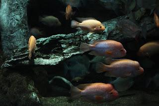 Travel Journal: Sunshine City Aquarium