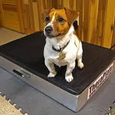 oscilador elétrico para cães
