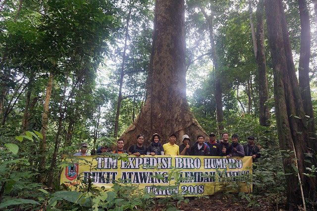 Asyiknya Jelajahi Lembah Kahung (bagian 2), Temukan Pohon Meranti Raksasa Ciri Khas Hutan Kahung