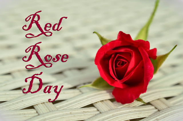 funny rose day