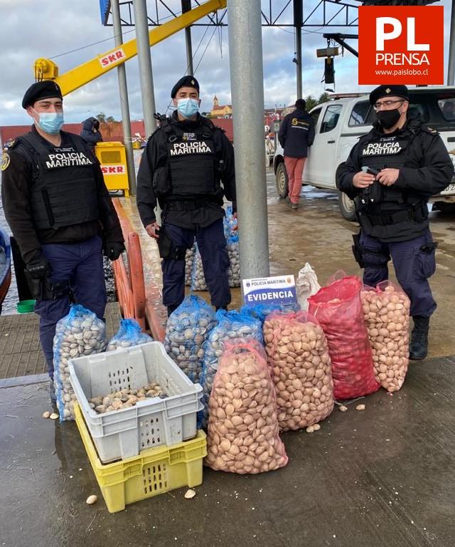 Autoridad marítima incautó nuevamente recurso almeja en Maullín