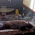 Όταν μια αρκούδα ξεκουράζεται στο μπάνιο...
