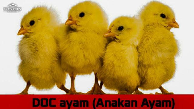 DOC Tahap Awal