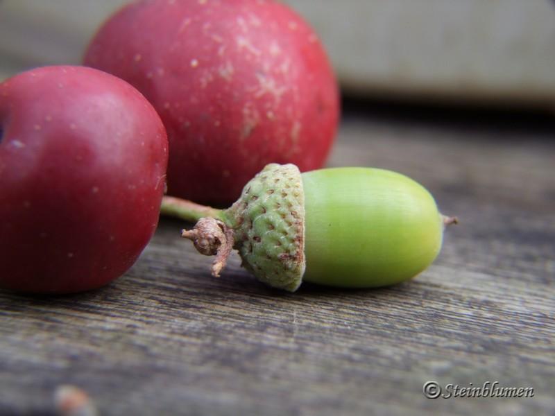 Herbstdeko mit Eicheln und Zieräpfeln