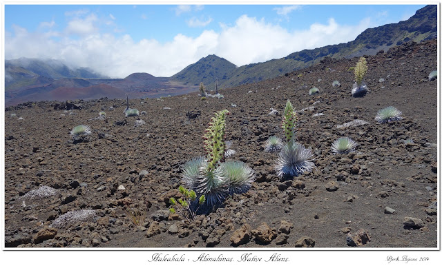 Haleakala: Ahinahinas. Native Aliens.