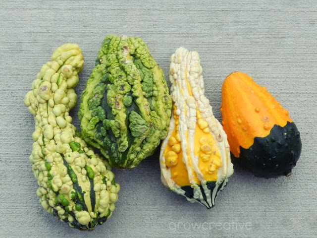 orange, green, and yellow warty decorative gourds