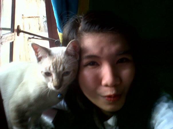 6 Kucing Asli Indonesia Yg Terancam Punah Flauschige Katzen