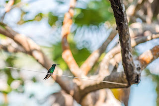 hummingbirds, #payabay, #payabayresort, paya bay resort, fauna, bird watching, birdlife,