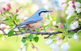 gambar burung cantik dari berbagai negara