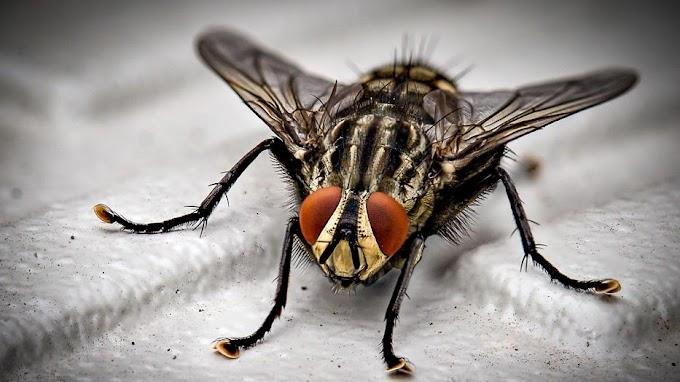 A Tolna megyei Koppányszántón annyi a légy, hogy mire az ember befalna egy kanál levest, 4-5 rovar is belerepül