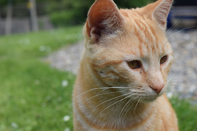 cat sitting ireland