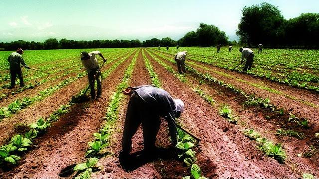 Renovación de la línea de financiamiento de Capital de Trabajo para las economías regionales