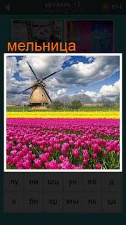 поле с тюльпанами и вдали стоит мельница 667 слов 12 уровень