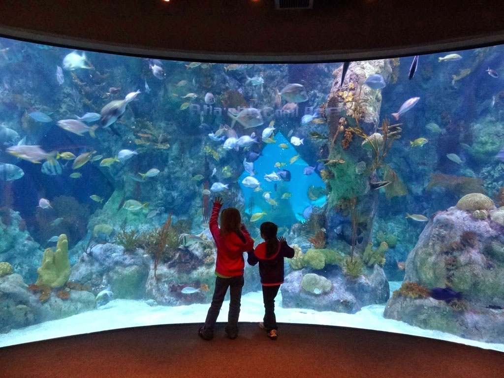 14 Amazing Photos of the Albuquerque Aquarium Albuquerque New