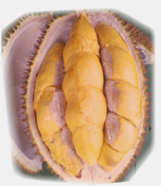 Ciri-Ciri Bibit Durian Unggulan Kualitas Terbaik