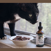 Only Natural Pet Senior Feline Herbal Formula Review