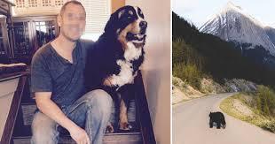 Житель Канады попробовал отбить своего пса у медведя и проиграл