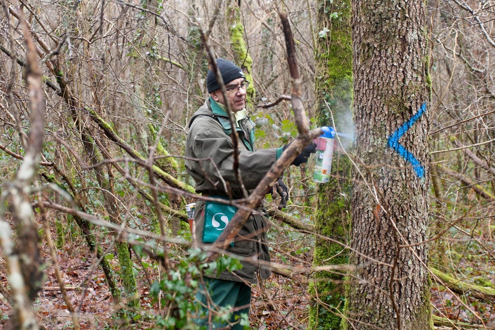 Com onf comment d coder les marquages sur les arbres - Comment faire crever un arbre sans le couper ...