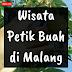 Wisata Petik Buah di Malang