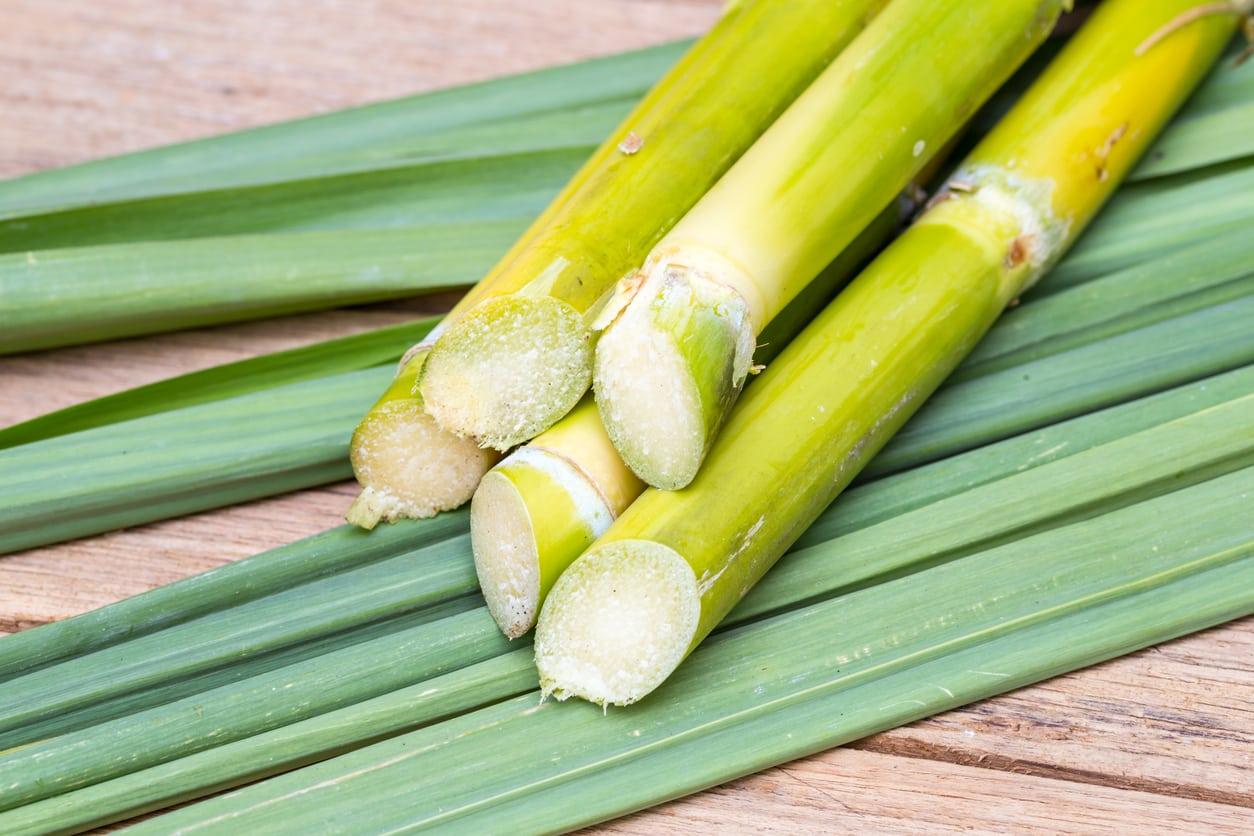 Sugarcane गन्ना