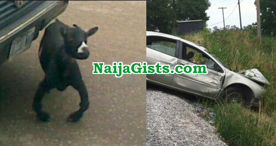 strange goat ibadan accident