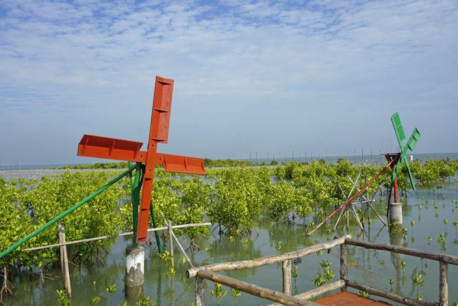 Kincir angin ala-ala di Jembatan Merah Mangrove Pasarbanggi