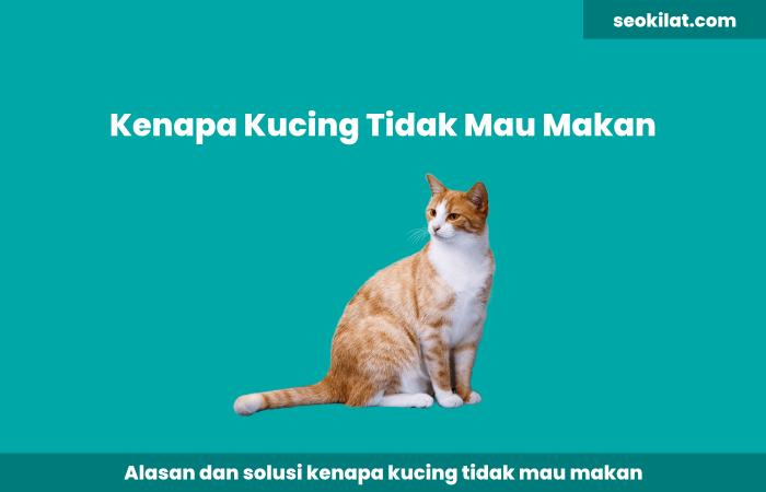 Kenapa Kucing Tidak Mau Makan