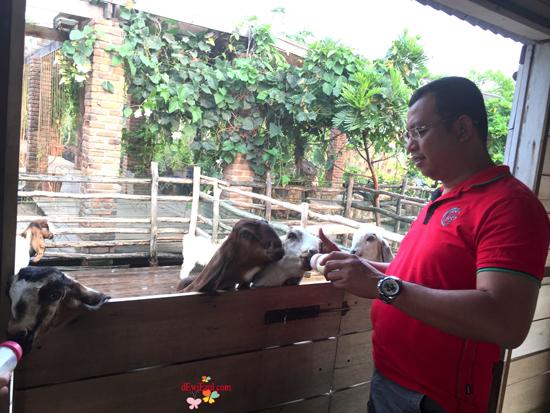 wisata memberi minum susu kambing sapi di Bandung,wisata untuk anak anak di Bandung,wisata baru di bandung untuk anak family,lactasari farm bandung review, pengalaman ke lactasari farm bandung,dimana tempat memberikan makanan sapi kambing di mall,dimana tempat memberikan makanan minum susu sapi kambing di mall,jalan jalan ke lactasari farm Bandung Paris van java Bandung
