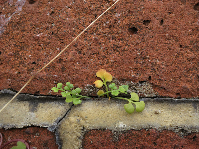 A small plant grows between the  brick and mortar of a wall