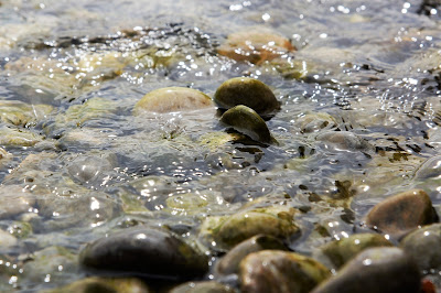 water in a stream with stones sticking out