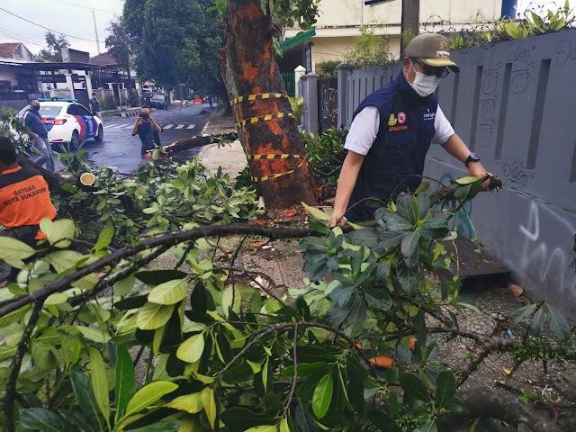 Wali Kota Sukabumi Pantau Langsung Bencana Pohon Tumbang di Sejumlah Titik