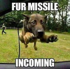 Dog Humor : Incoming