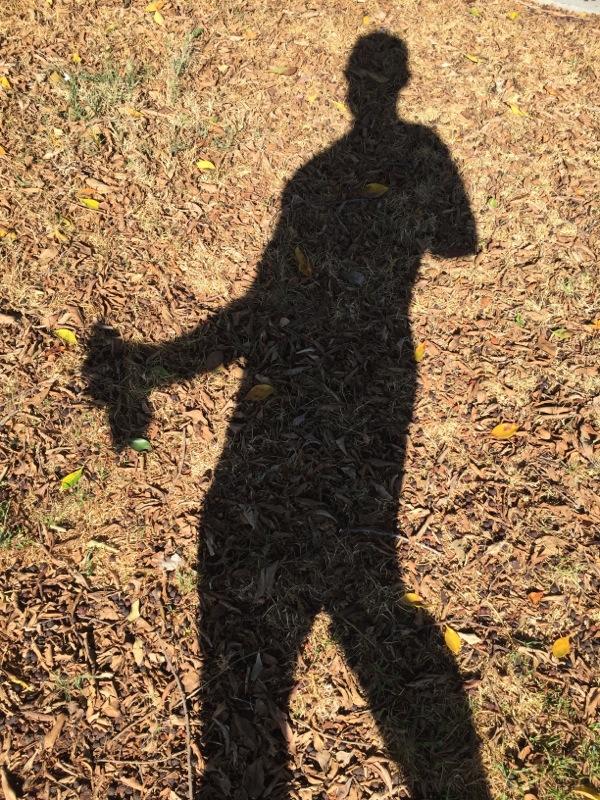 Shadow on mulch