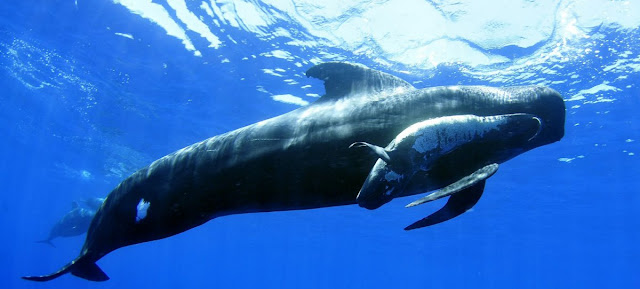 Cetaceos y biologia