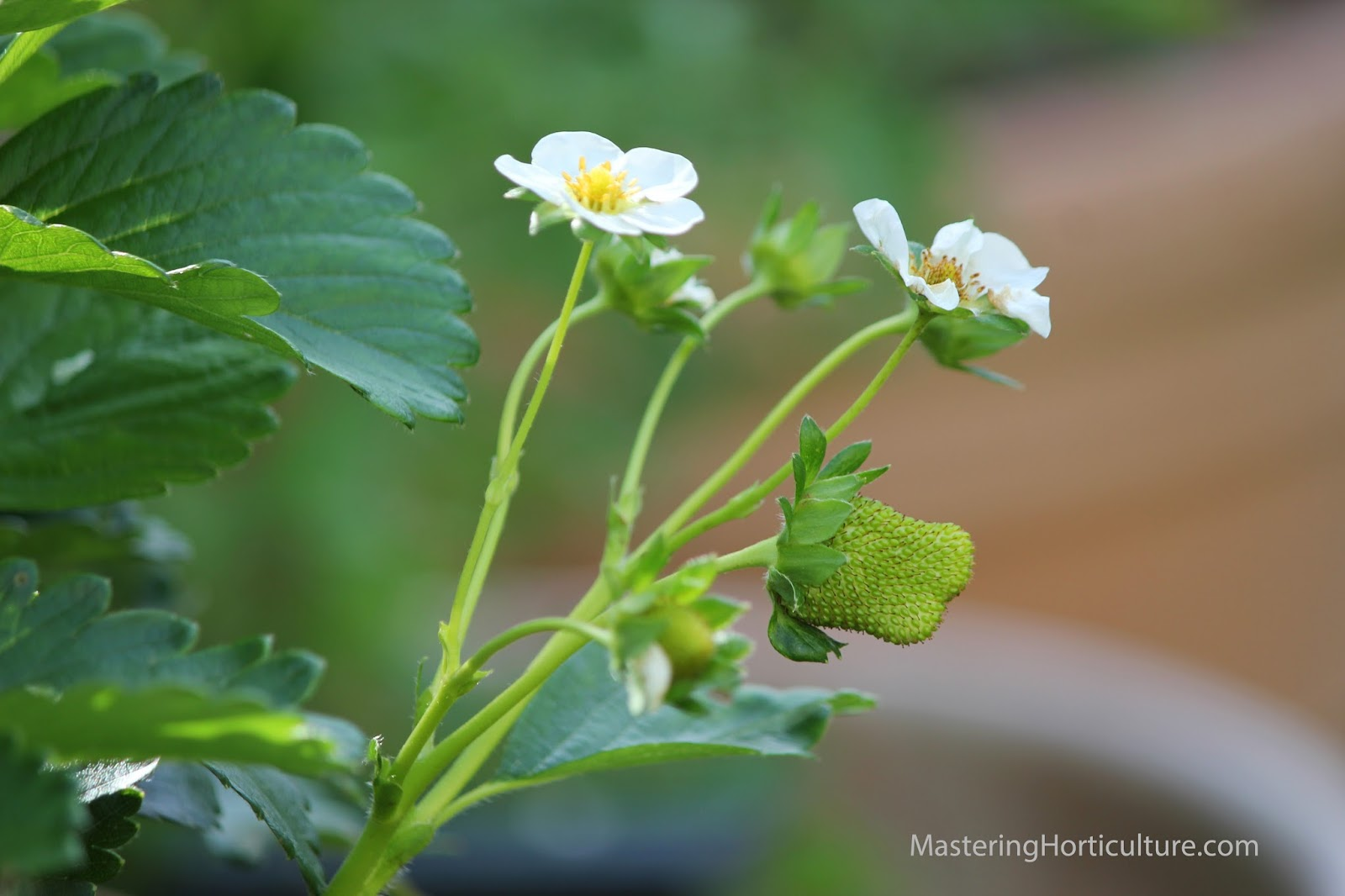 understanding horticulture Horticulture definition, the cultivation of a garden, orchard, or nursery the cultivation of flowers, fruits, vegetables, or ornamental plants see more.