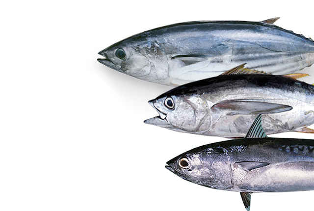 Tempat Jual Ikan Cakalang Konsumsi Yogyakarta Per Kg