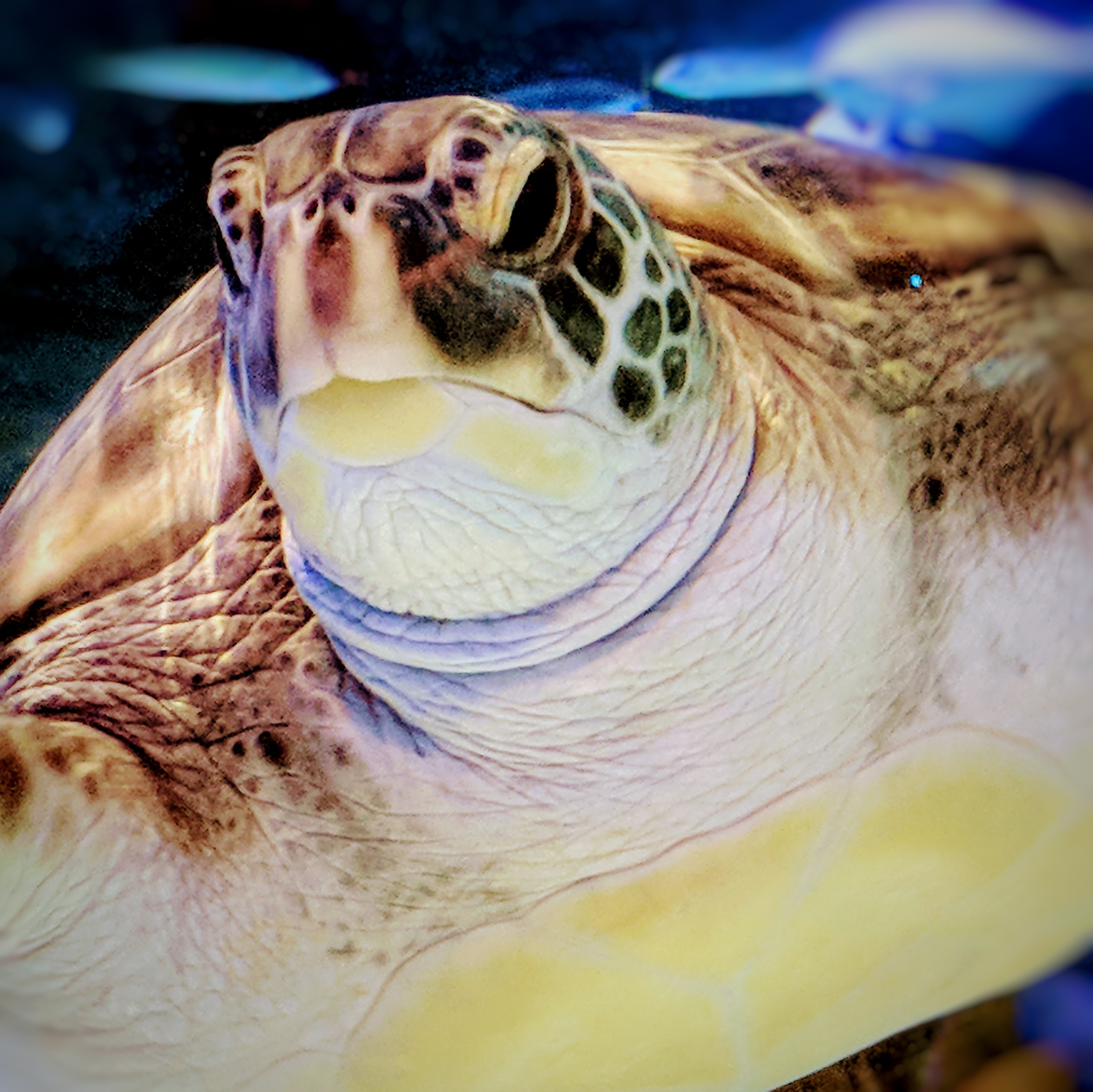 Aquarium turtle looking  grumpy